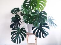 15 ошибок в уходе за комнатными растениями