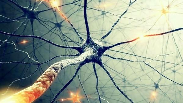 Нейроны позволят вылечить эпилепсию