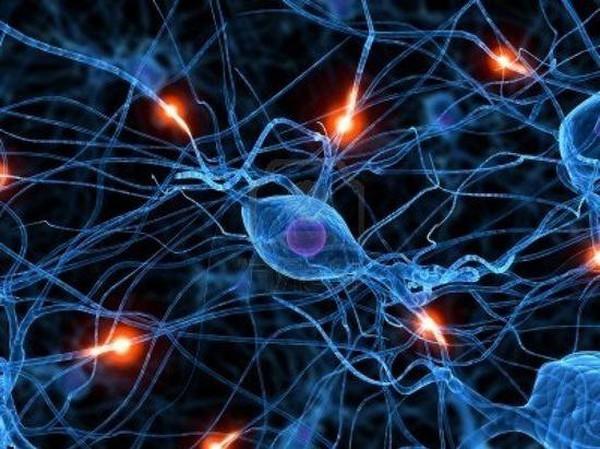 картинки клетки человека