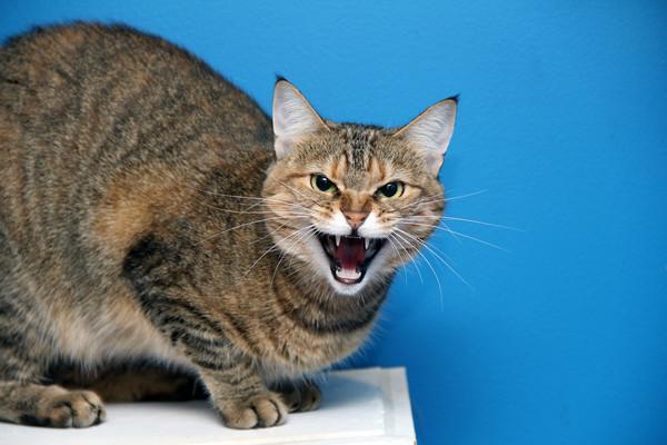 Кошка родила дома? Придется заплатить от 5100 до 20 400 гривен