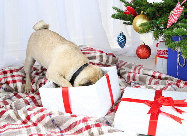 Год 2018 по восточному календарю: символ года Желтая Собака