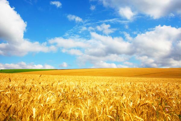 Российский фотосепаратор «Зоркий» покоряет иностранных аграриев