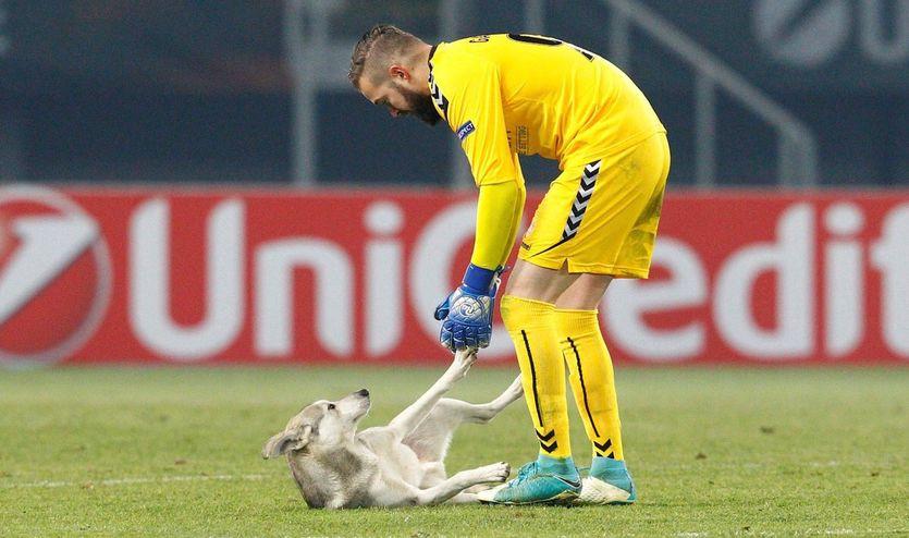Игривый пес под взрывы файеров стал рыть яму в центре поля в матче Лиги Европы