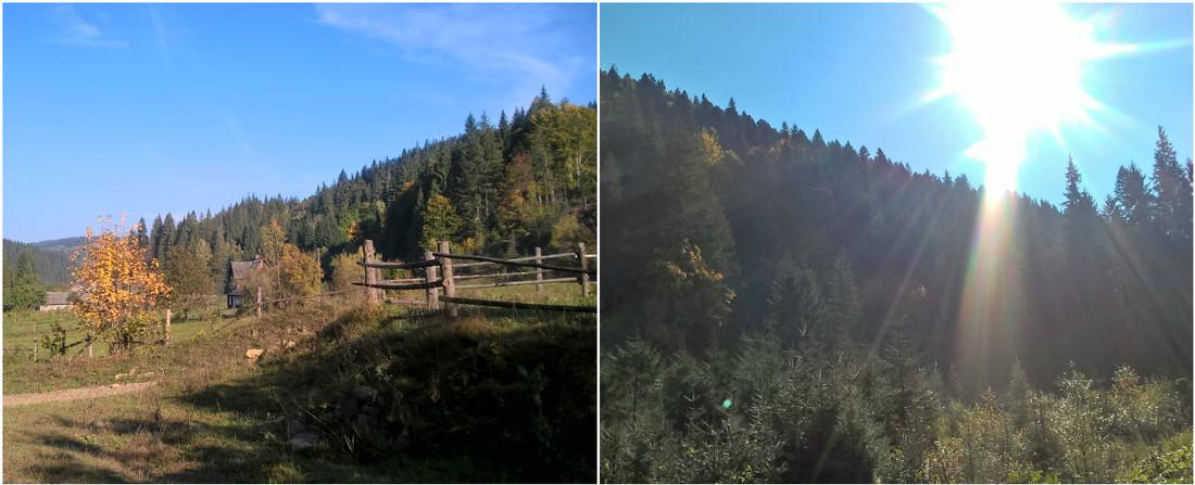 Пейзажи буковинских лесов