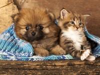 Как уговорить мужа завести кота или собаку