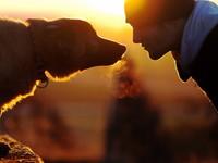 Чему бизнесменам следует учиться у собак