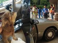 В США собаки