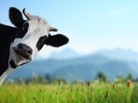 Названы наиболее затратные для планеты продукты питания