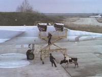 Коровы в самолете: десять чокнутых грузов, отправленных воздухом