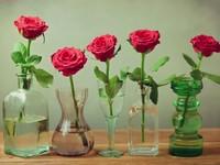 Правда ли, что беседы помогают цветам расти