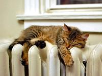 Как сберечь тепло в квартире и сэкономить деньги