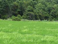 Установлены правила проведения земельных аукционов