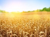 Что и куда могут экспортировать украинские аграрии?