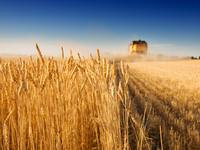 Надежда на цены: На что могут рассчитывать крупные экспортеры Украины