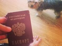 Собака погрызла паспорт российского хоккеиста