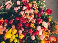 Для душі: весна у віршах українських письменників