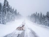 Сказочная Лапландия: там, где живет Санта