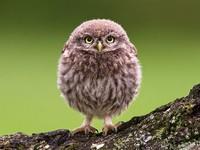 Комочек счастья: милые фото круглых животных