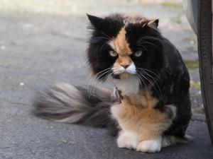 Зло во плоти: фото опасных котиков, которые тебе не рады