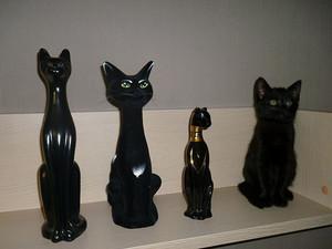 Найди кота: хвостатые гуру маскировки