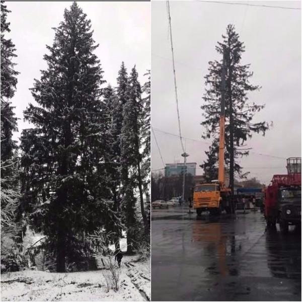 Елка до и после транспортировки в Кишинев