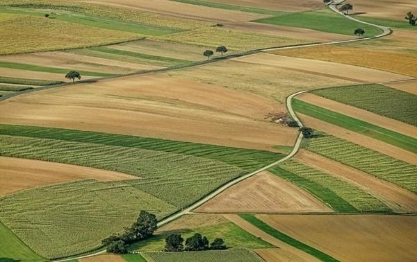 Из госсобственности незаконно вывели 700 тысяч га земель0
