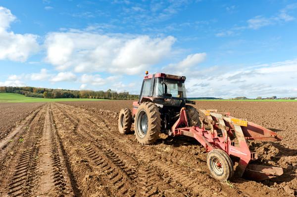В 2016 году Украина поставила рекорды по урожайности нескольких видов зерновых