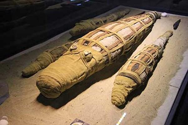 В Египте нашли мумию огромного крокодила
