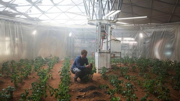 Главный герой выращивает на Марсе картошку, оборудовав для этого помещение станции