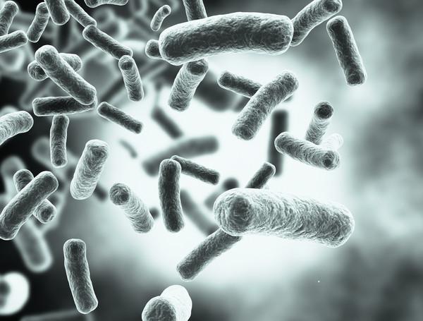 3,7 млрд лет назад бактерии уже жили в водах мирового океана