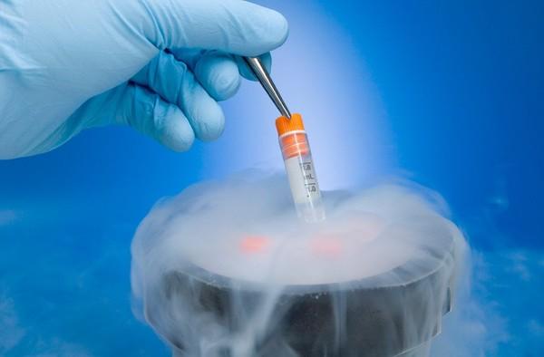 Органы охлаждают с помощью жидкого азота, используя специальный антифриз