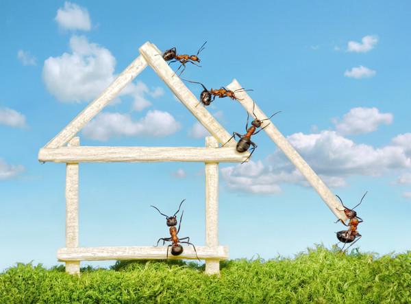 Муравьи берут природное вещество и обрабатывают его, повышая эффективность, совсем как люди