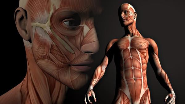Так как главная идея - адаптировать ткани к механической нагрузке, то идея исследования наиболее актуальна для мышц и сухожилий