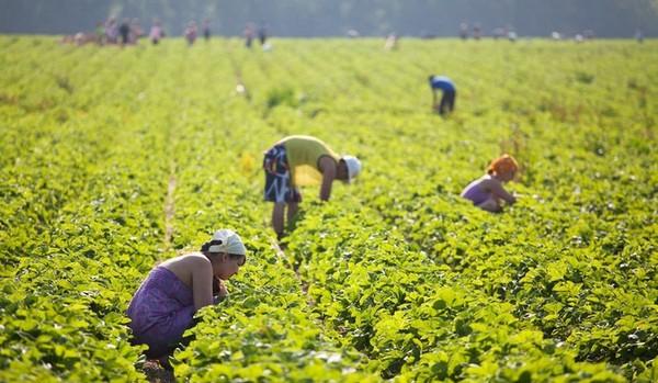 Украинцы едут в Финляндию на сезонную работу