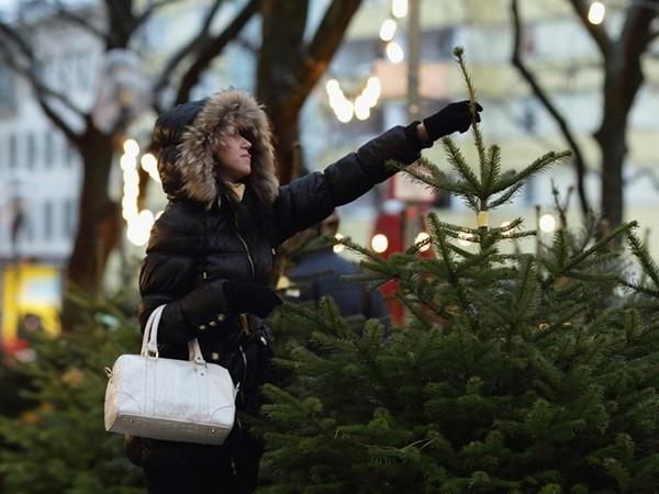 Нехватки живых елок ожидать на этот Новый год не стоит