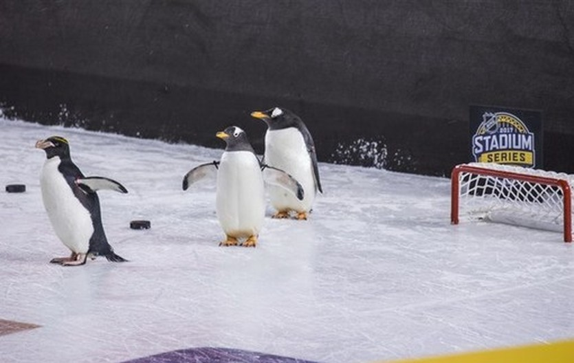 Пингвины порадовали болельщиков Питтсбурга