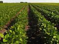 Аграрии рассказали, какая площадь земель в Украине обрабатывается незаконно