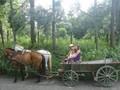 Украинские селяне не хотят выращивать продукцию на продажу (опрос)