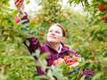 Китайская компания будет инвестировать в украинское садоводство