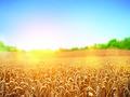 Шейцария готова инвестировать в агросектор Украины