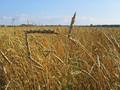 Зерно подорожает на 20%, мясо на 30%, - ООН