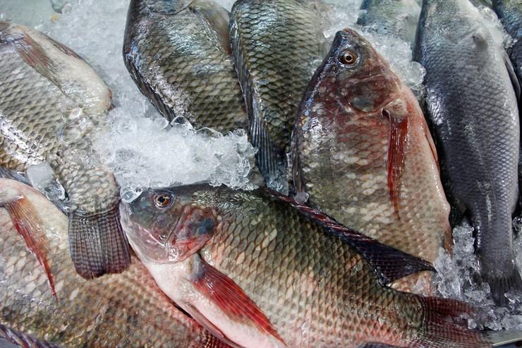 Как выбирать свежую рыбу